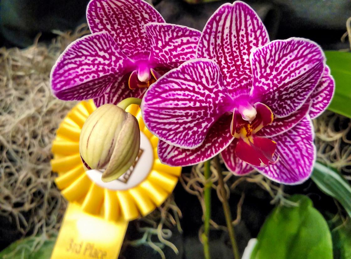 Huntington Garden Orchid Sale