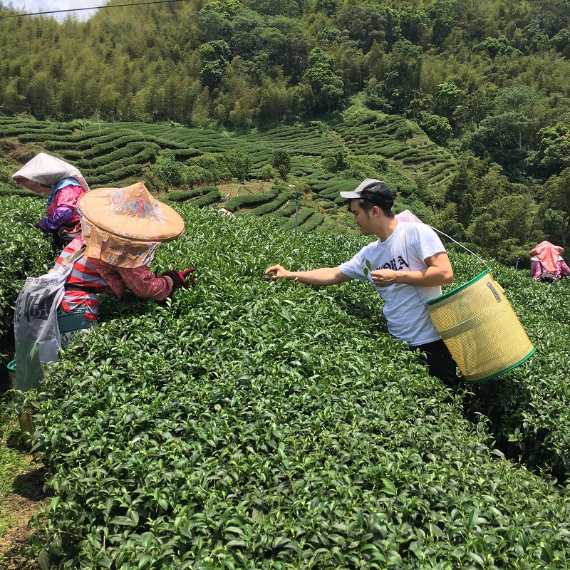 Labobatory: In summer 2016, Keung traveled to mountainous farms in Gukeng, Taiwan