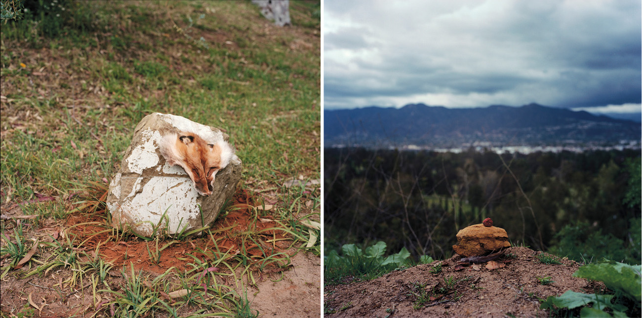 """In the Beginning There Was Fox and Cinnamon"" and ""Contemplating Loss"" by Mercedes Dorame."