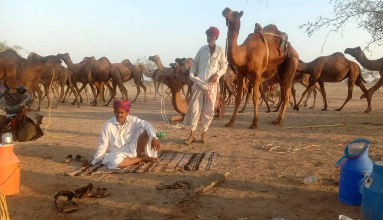 A view of Raika camel herders in India's state of Rajasthan. | Photo: Sumer Singh Bhati/Foundation for Ecological Security