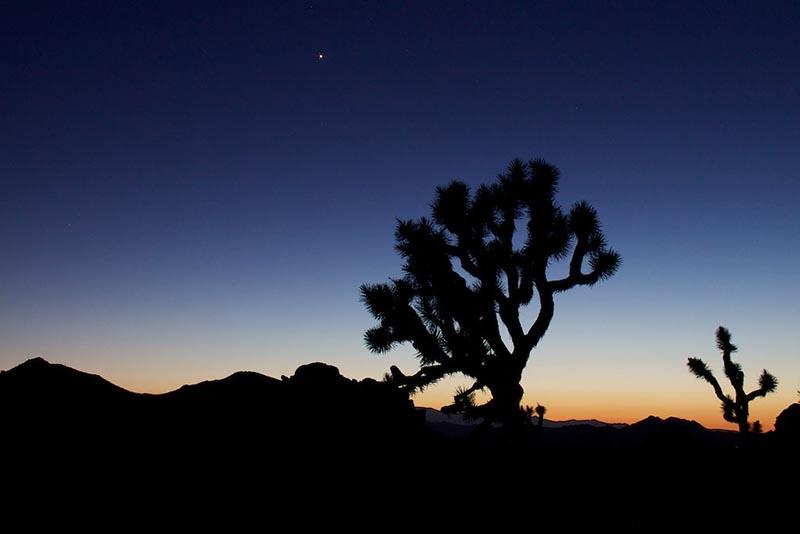 j-tree-silhouette-9-27-16.jpg