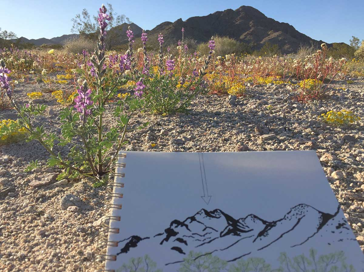 Cleghorn Wilderness site, a vast wild area where undue search and seizure could potentially happen because it is within the 100-mile border zone | Jena Lee