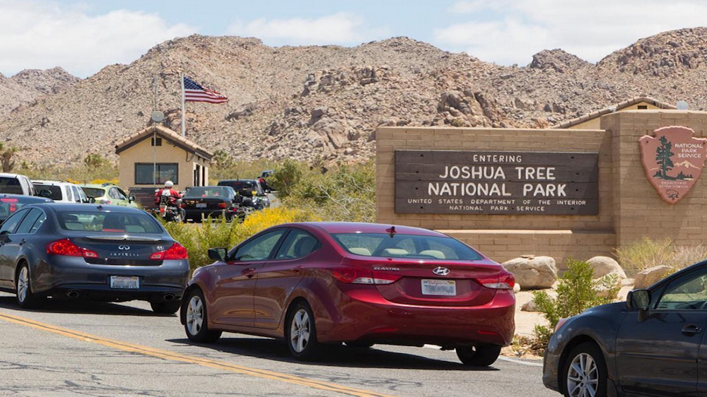 Visiting Joshua Tree? Here are Four Easy Ways to Reduce Your ...