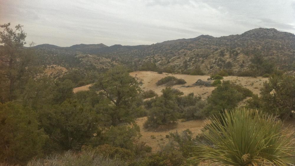 The juniper belt of the San Bernardino Mountains | Photo: Chris Clarke