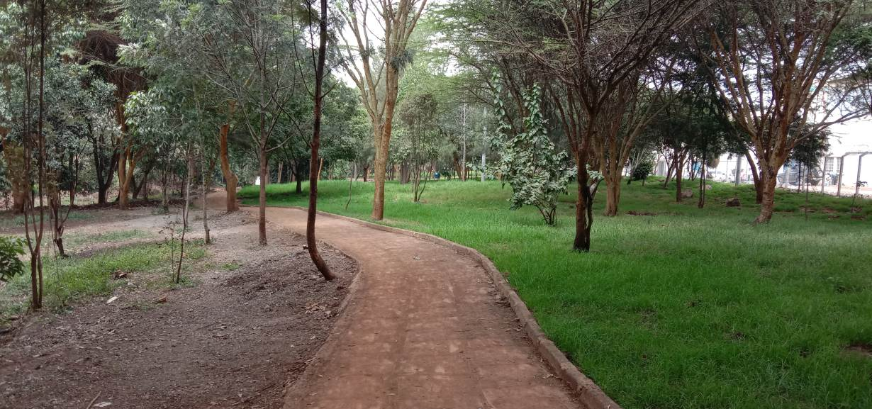 A view of a rehabilitated grassy area in Michuki Memorial Park, Nairobi, July 29, 2020. | Thomson Reuters Foundation/Wesley Langat