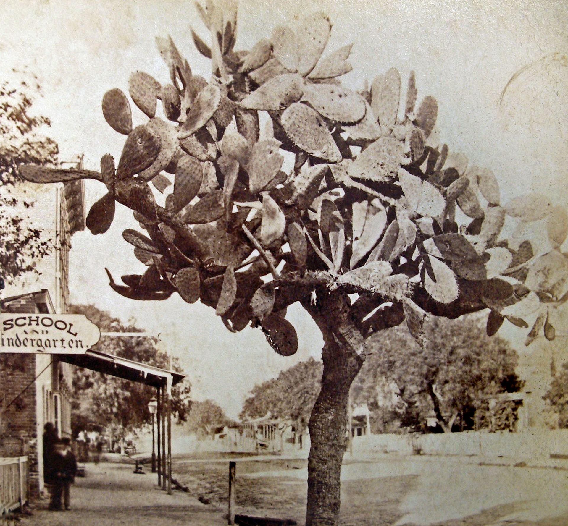 Kindergarten, ca. 1878. A cactus hedge fenced the Garden of Paradise on Main Street. When it briefly became a school, only one prickly-pear cactus remained. Photograph courtesy of California Historical Society Collection, USC Libraries