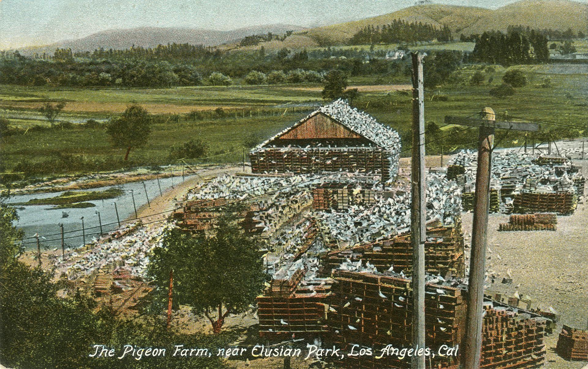 Pigeon Farm postcard