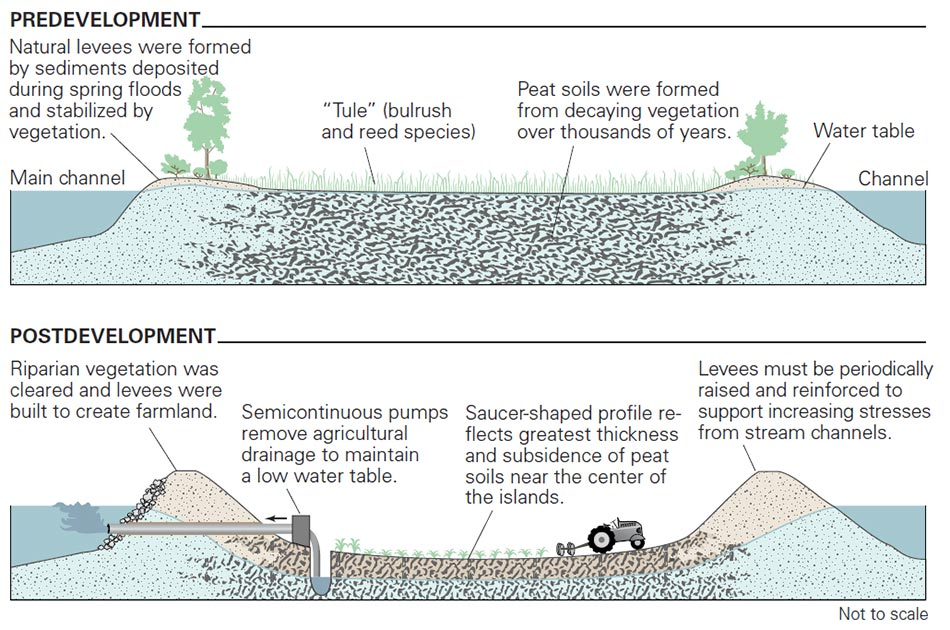 Diagram of Sinking and Levees
