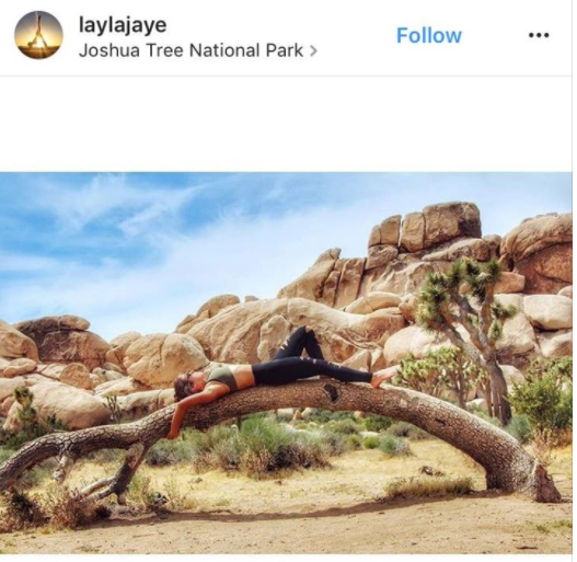 Person lounging on Joshua tree |  Image: via Instagram