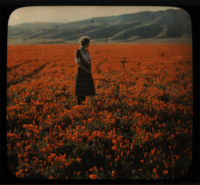 A field of California poppies in the Antelope Valley in the late 1800s or early 1900s. Courtesy of the Braun Research Library Collection, Autry National Center. LS.3043. TheAutry.org.