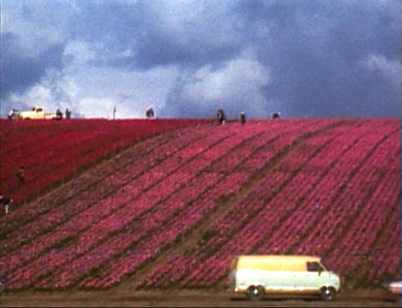 """Martha Rosler, """"Flower Fields,"""" 1974"""