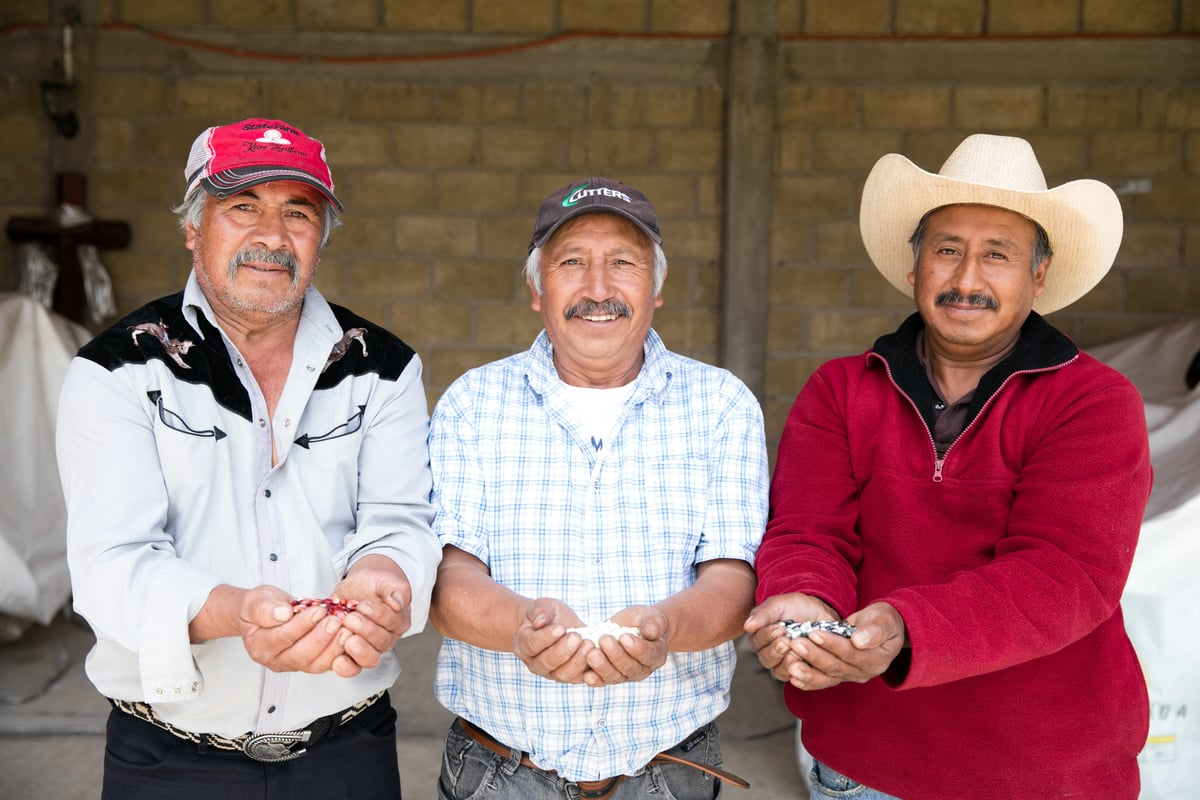 Masienda works with small-scale farmers growing heirloom corn in Mexico | Molly DeCoudreaux