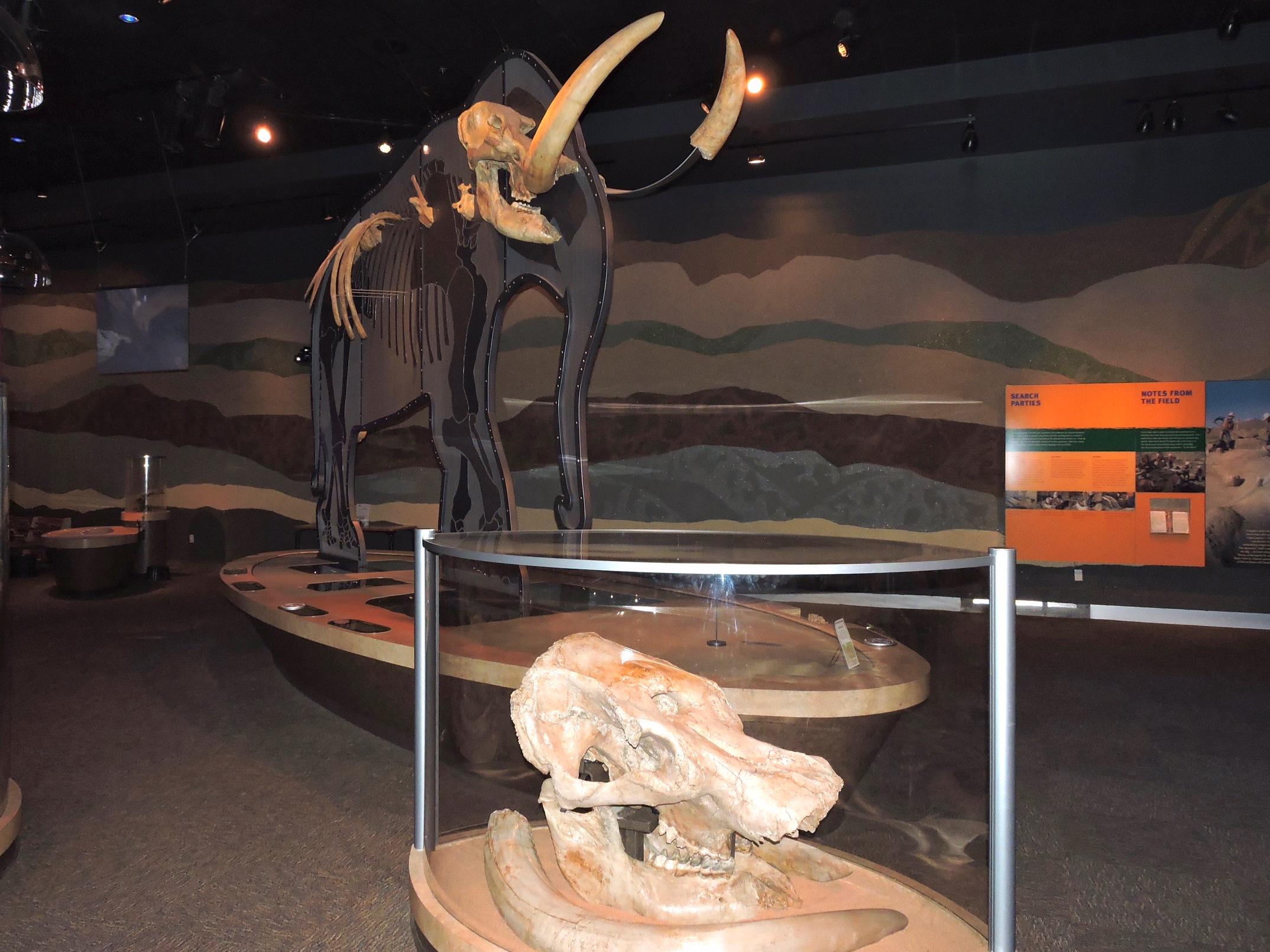 mastodon-fossils-2-5-11-16.jpg