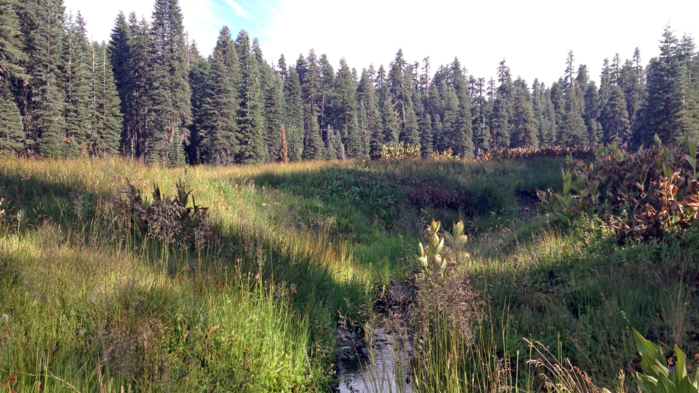 A stream in Milk Ranch Meadow | Photo: Greg Veen, some rights reserved