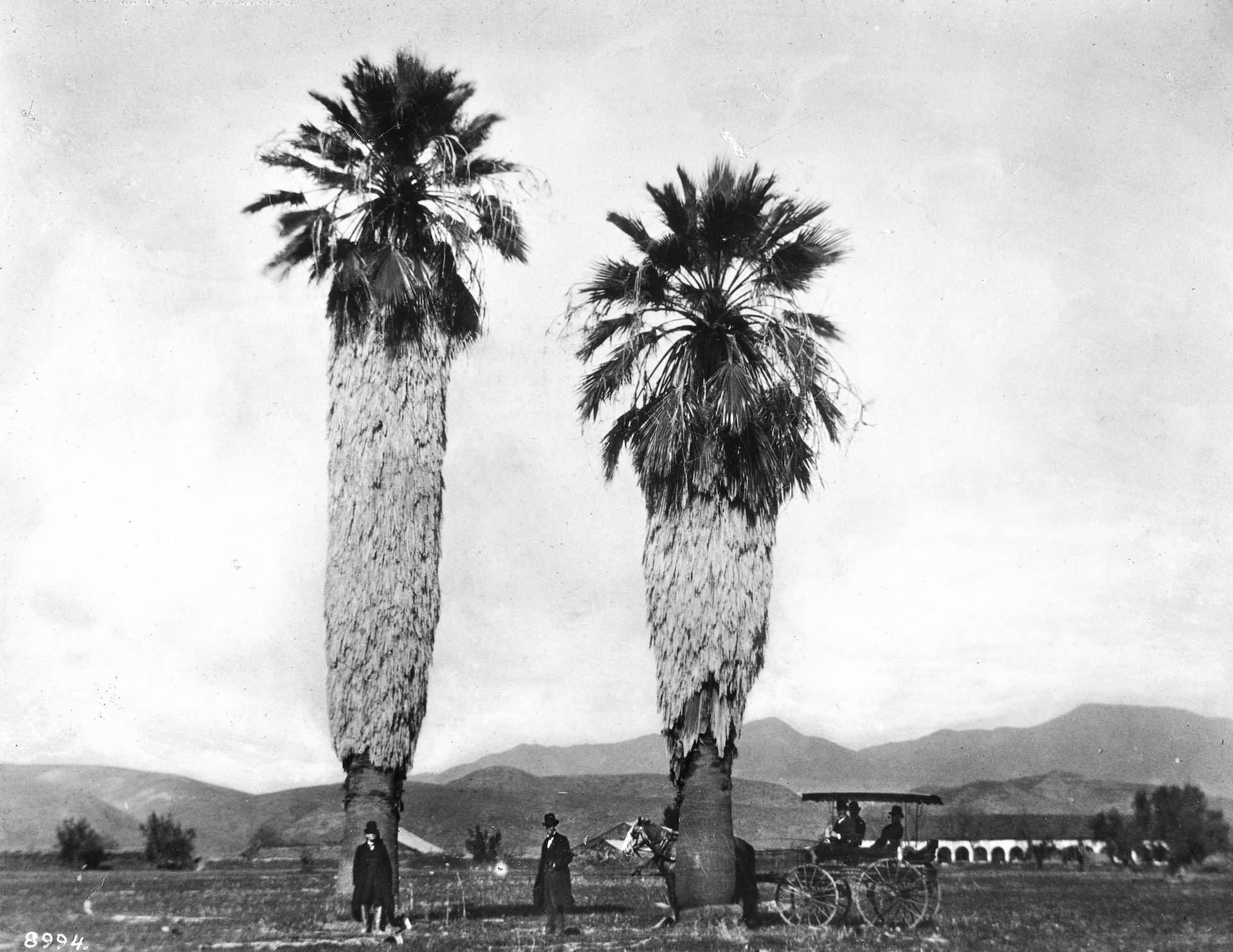 Men rest beneath two fan palms, perhaps planted by Spanish missionaries, in front of Mission San Fernando, circa 1886. Courtesy of the Title Insurance and Trust / C.C. Pierce Photography Collection, USC Libraries.