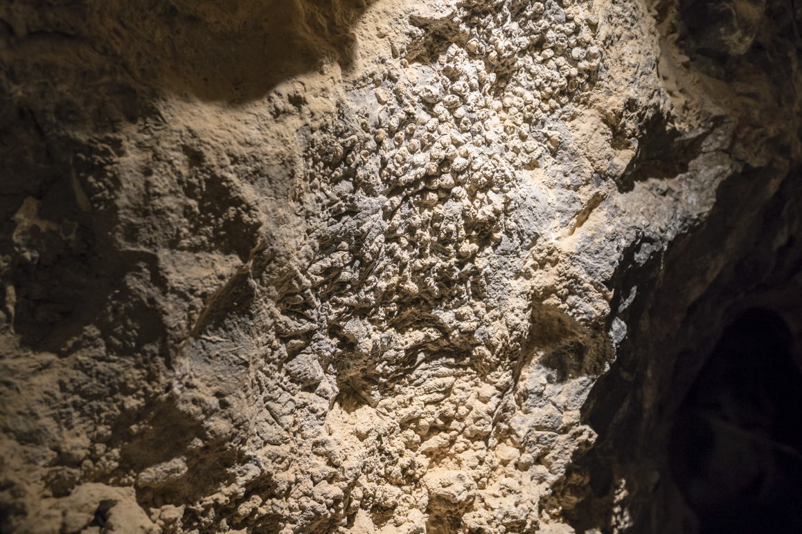 Above: Delicate tube coral fossils found within Mitchell Caverns. Photo: Kim Stringfellow