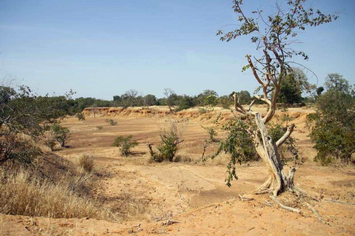 FILE PHOTO: Parched land is pictured around the Lake Wegnia, in Sahel region of Koulikoro, Mali November 22, 2019. | REUTERS/Arouna Sissoko
