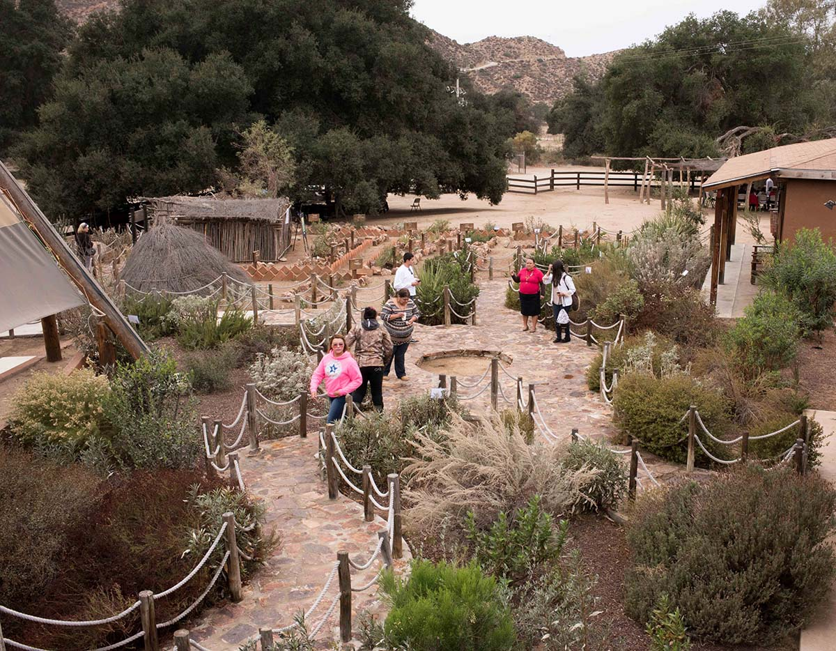 Necua education center museum and native plants and medicine | Rose Ramirez