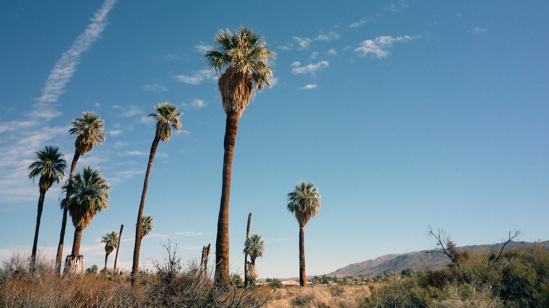 Palm trees at Oasis of Mara