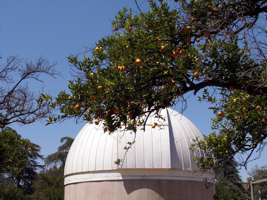 Where to Find the Bygone Citrus Groves of Southern