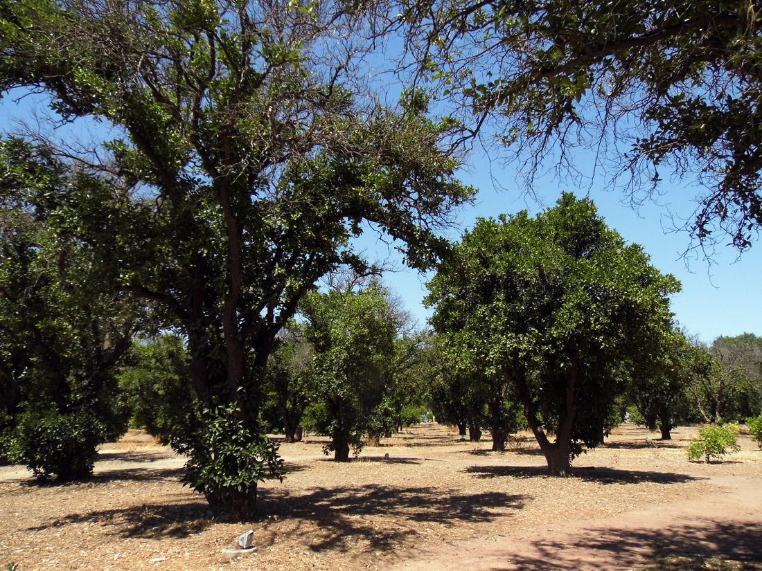 Orange Grove, Northridge