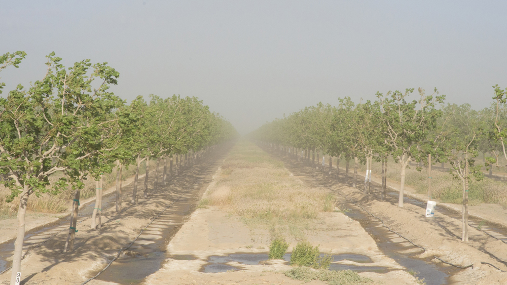 Orchard with bad air quality | Photo: David Prasad, some rights reserved