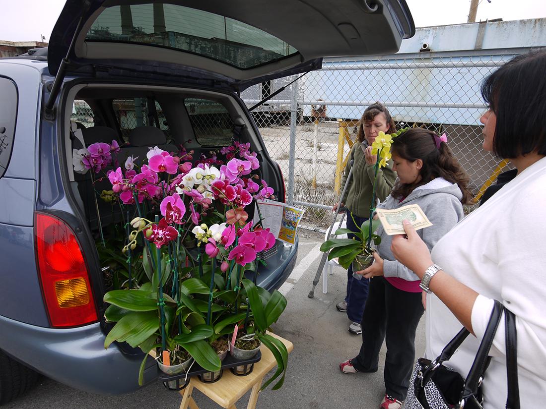 Monterey California Orchid Sale