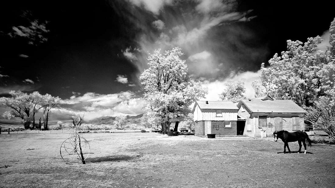 Boarded-Up Farm House with Watchful Horse - Infrared Exposure - Bishop, CA - 2016 | Osceola Refetoff