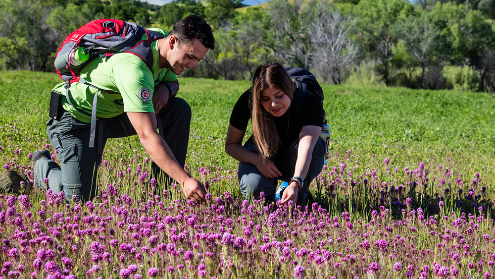 Hikers enjoy a patch of owl's clover | Photo: Bnb Wick, BLM