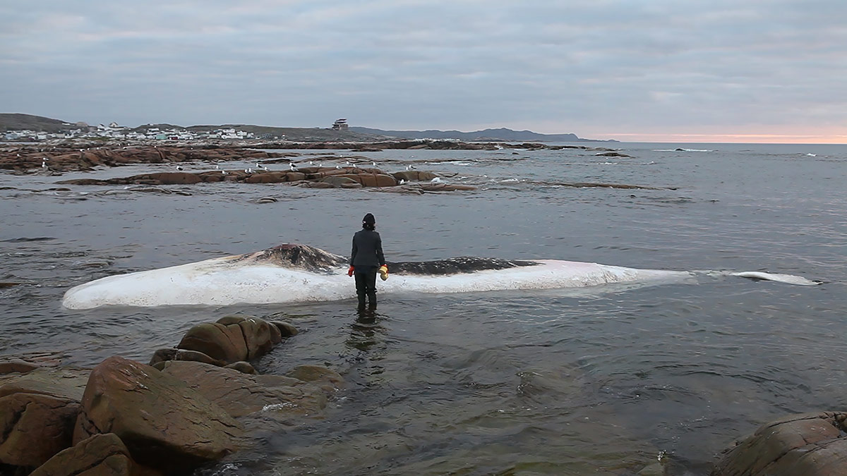 "On a walk in Newfoundland, artist Patty Chang found a dead sperm whale washed up on the shore and decided to wash it as a form of purifying the body to prepare it for the next stage. The scene became part of her 2016 work, ""Invocation of a Wandering Lake."