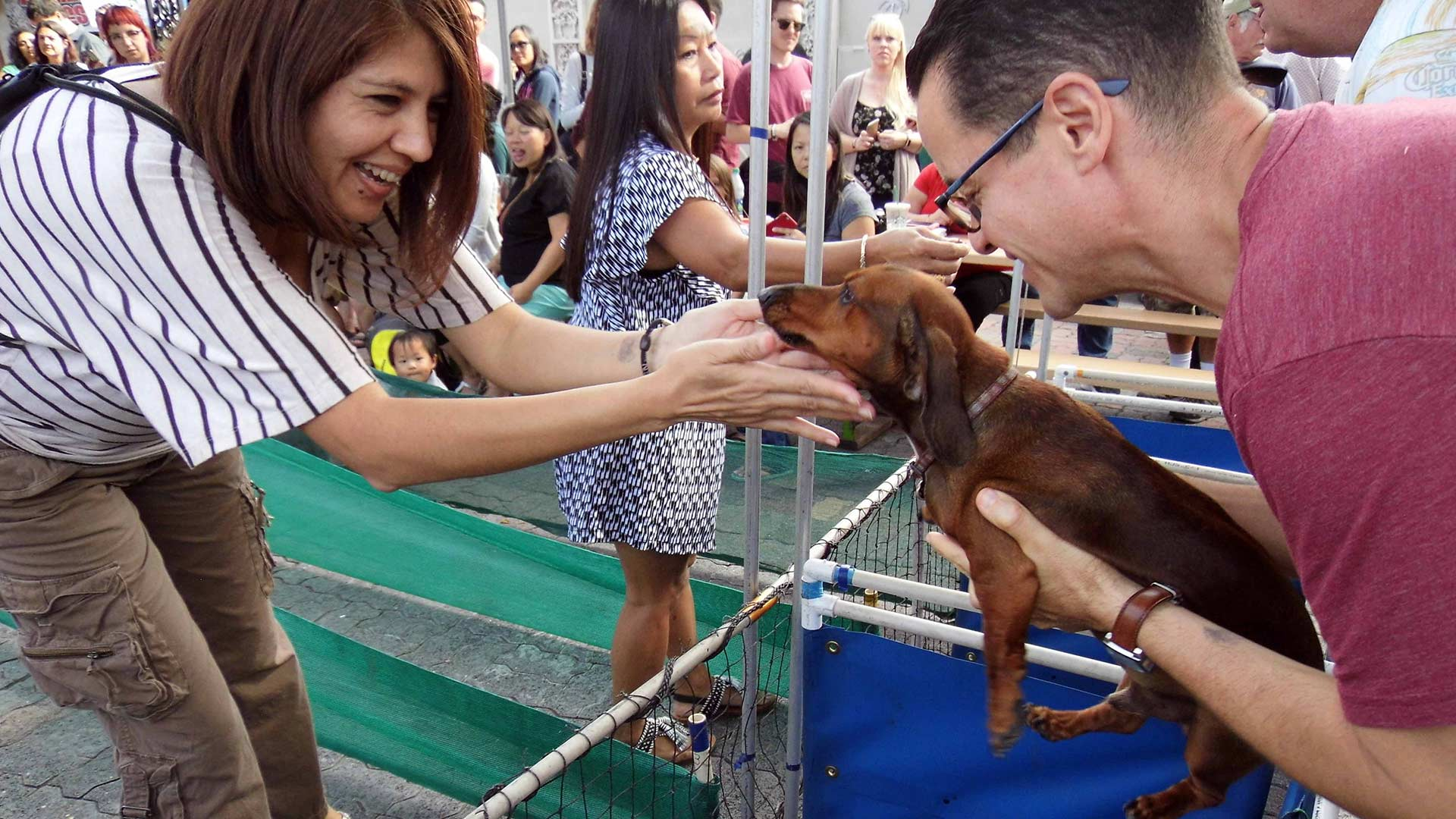 Woman coos at a dachshund being held up by another man