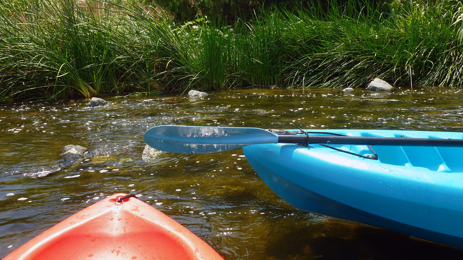 "Paddling through the watery ""trails"" at Glendale Narrows. 
