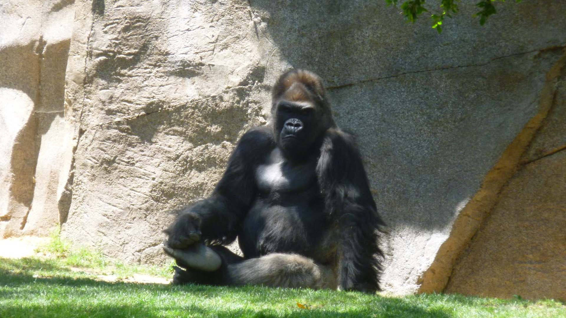 San Diego Zoo | Sandi Hemmerlein