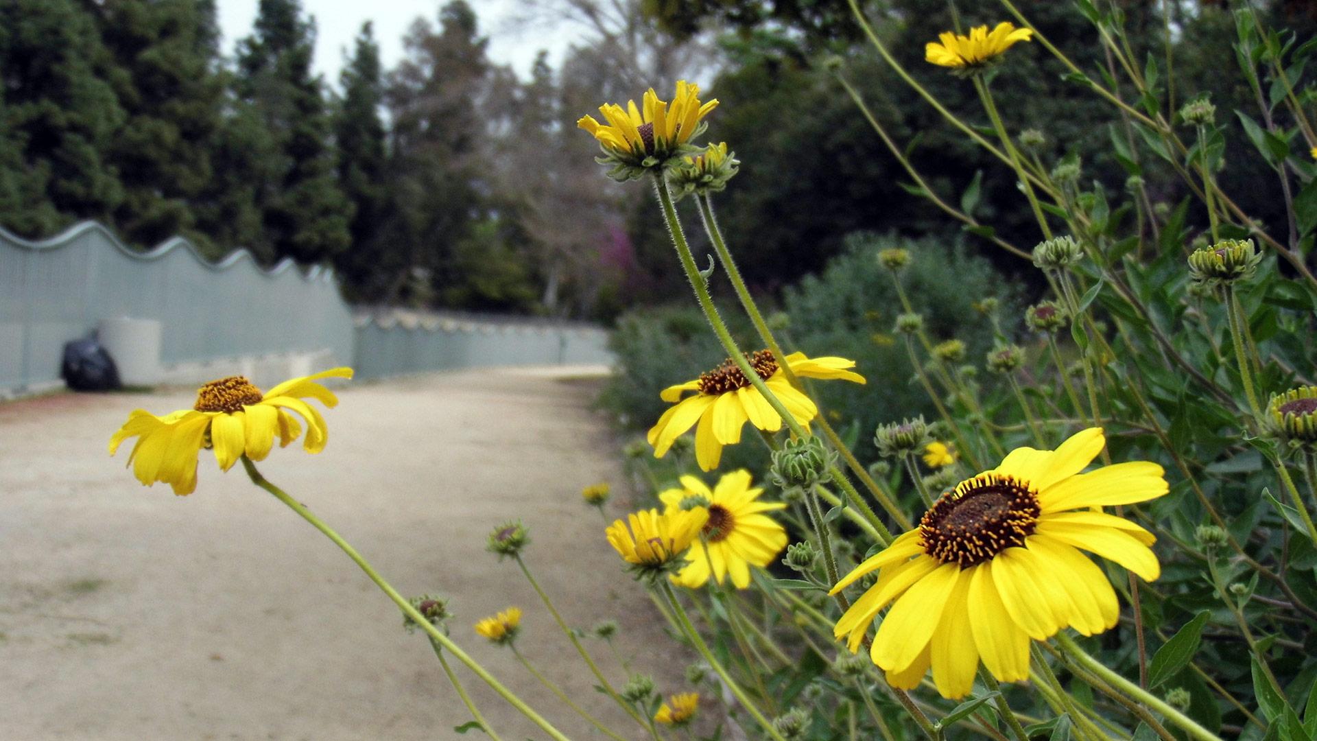Wildflowers along Valleyheart Greenway. | Sandi Hemmerlein