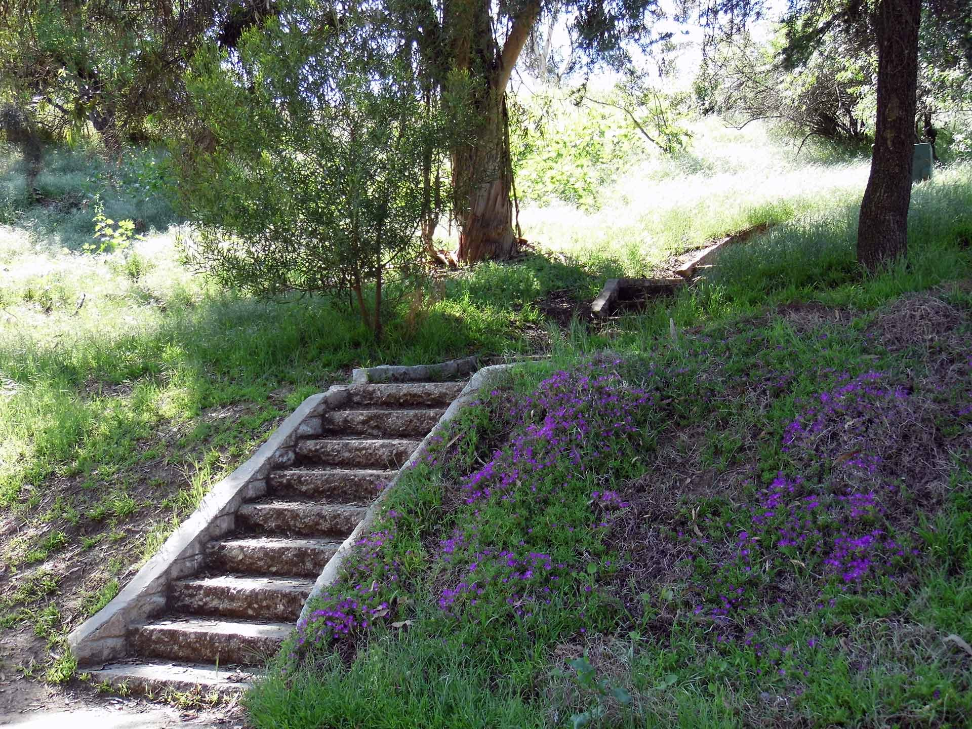 A set of stairs surrounded by wildflowers at Montecillo de Leo Politi Park. | Sandi Hemmerlein