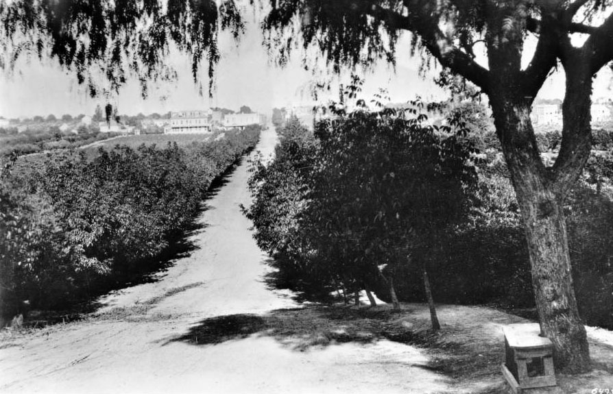 Circa 1885 view of Colorado Boulevard, then named Colorado Street, looking east toward Pasadena's central business district. Courtesy of the USC Libraries - California Historical Society Collection.