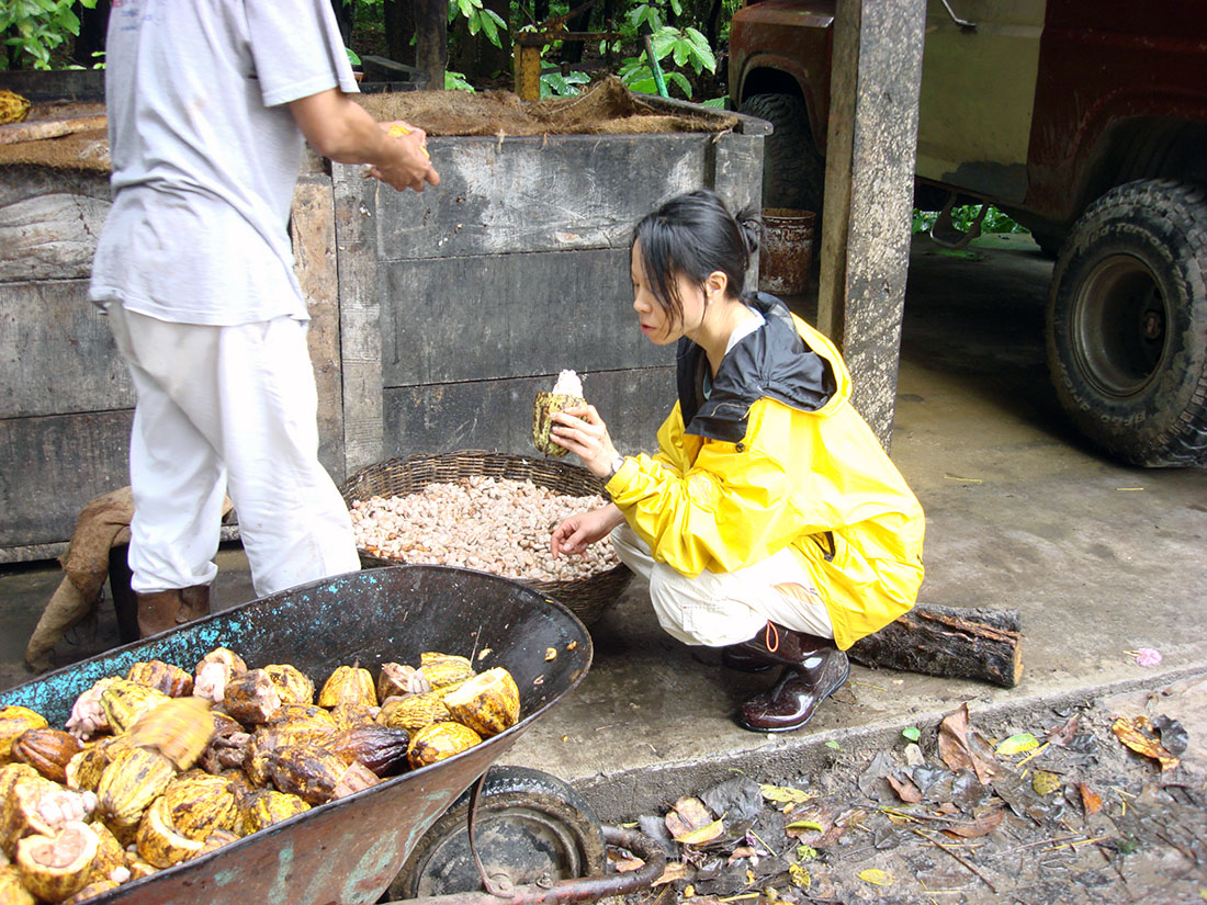 Patricia Tsai looking at fresh cacao beans ready to be fermented | Courtesy of ChocoVivo