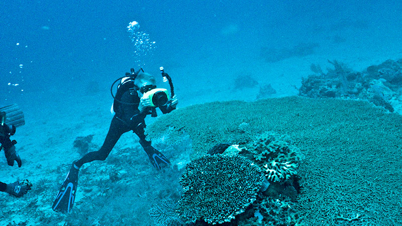 Phil Dustan examines a reef | Photo courtesy Phil Dustan