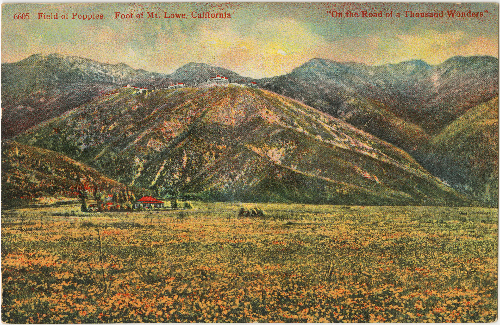 Circa 1893/1900 postcard of a poppy field at the foot of Mt. Lowe