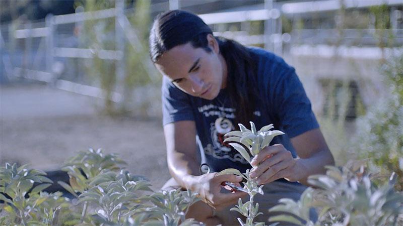 pruning-sage-11-4-16.jpg