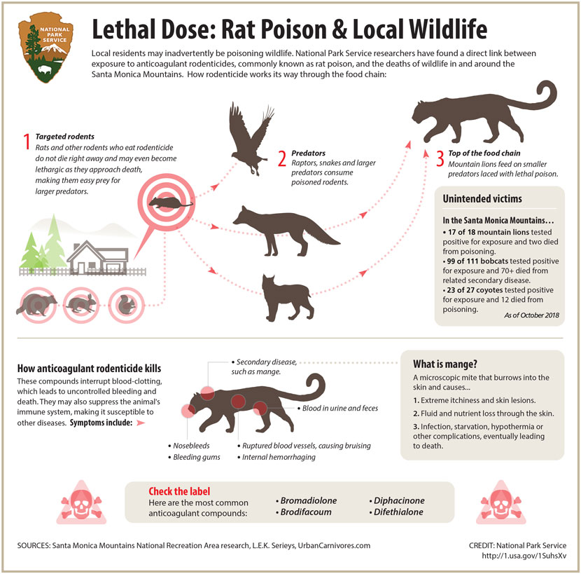 Infographic on the impact of rat poison on local wildlife. | National Park Service