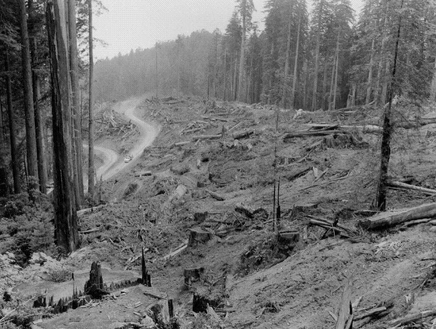 A clear-cut forest in 1959. Photo courtesy of the U.S. Forest Service.