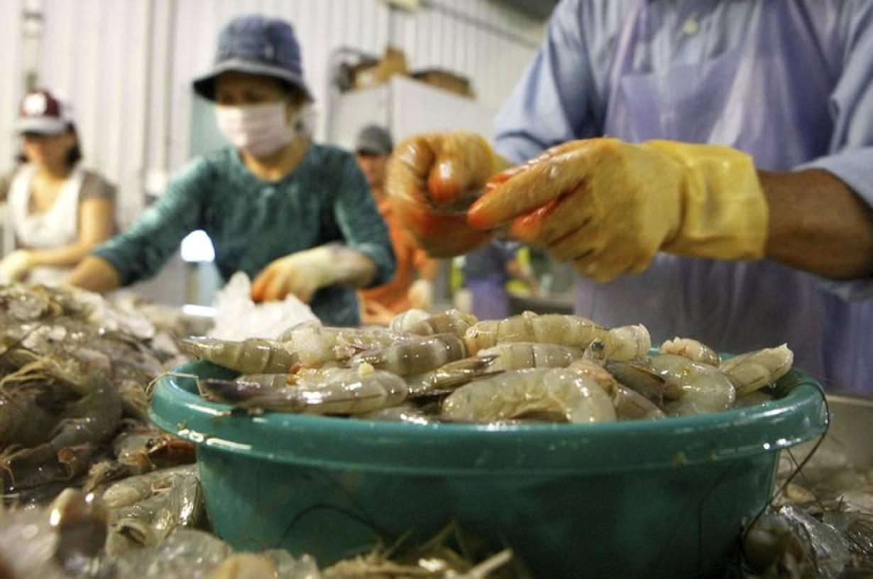 ARCHIVE PHOTO: Employees dehead Louisiana white shrimp at C.F. Gollott & Son Seafood in D'Iberville, Mississippi June 3, 2010. | REUTERS/Sean Gardner (UNITED STATES - Tags: DISASTER ENVIRONMENT BUSINESS FOOD)