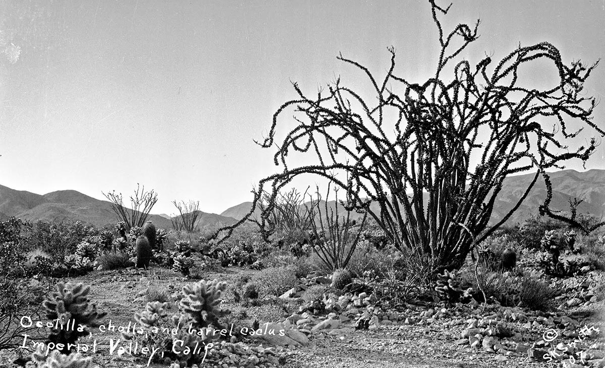 Susie Keef Smith's landscape photographs compare favorably with better-known desert photographers of the era. | Susie Keef Smith postcard. Chris Ervin Collection.