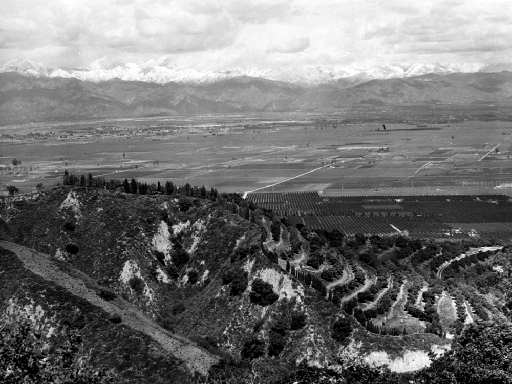 The orange groves seen in this panoramic view of the San Gabriel Valley in 1930 were replaced by urban development by 1960, impacting the recharge of the aquifer under the Central Basin.