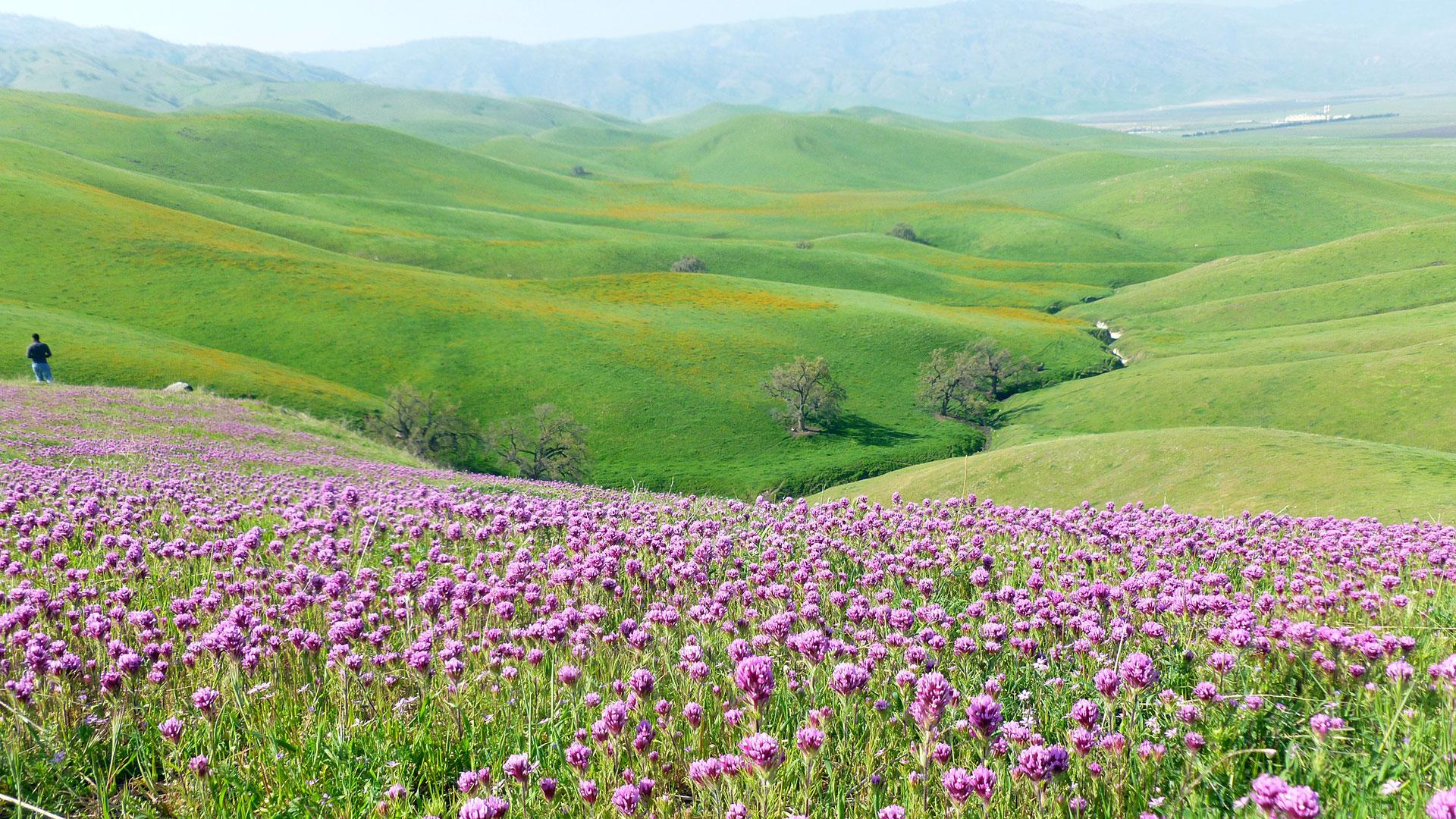 San Joachin Valley