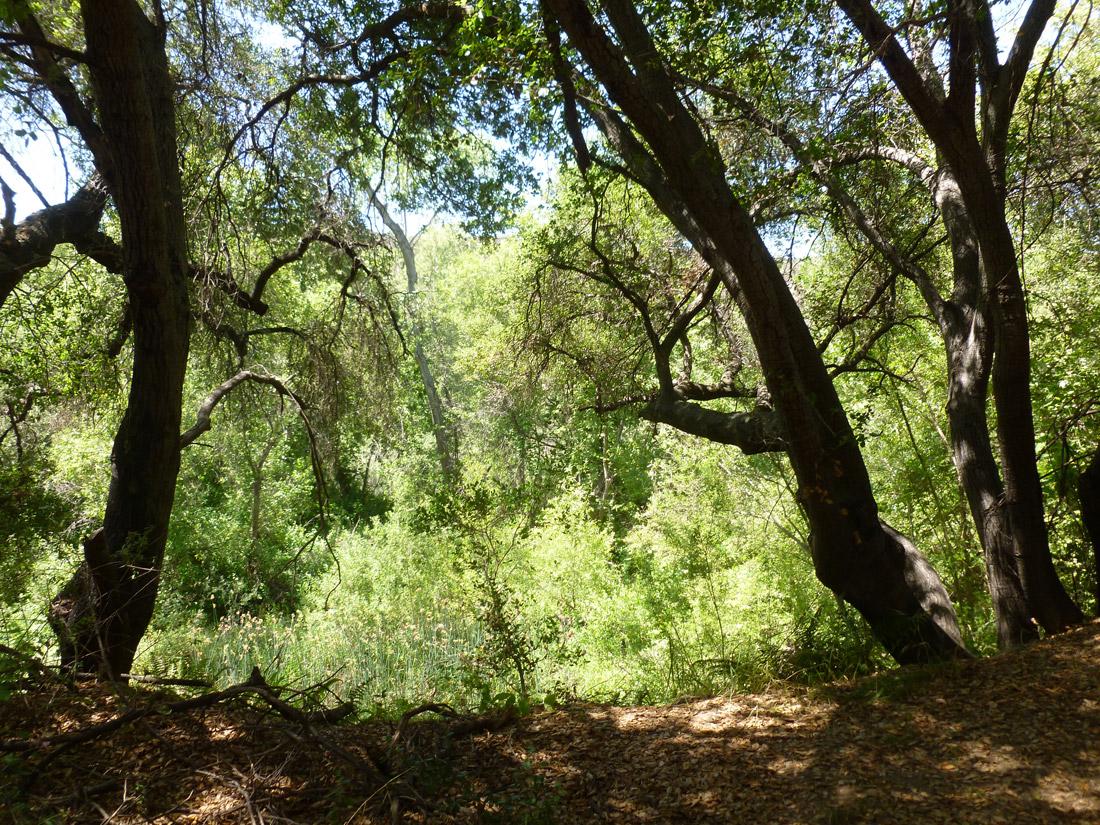 Santa Margarita River and Preserve (2)