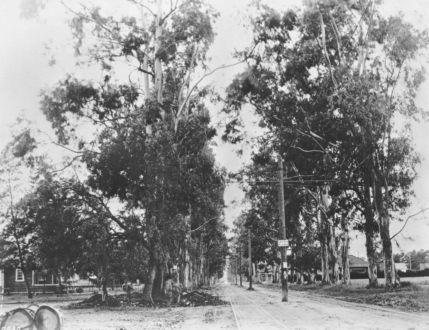 In 1906, Santa Monica Boulevard (seen here at Western Avenue in Colegrove) was little more than a narrow rail right-of-way doubling as a dirt road. Courtesy of the USC Libraries - California Historical Society Collection.