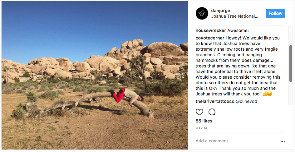 Another person weighting down a Joshua tree