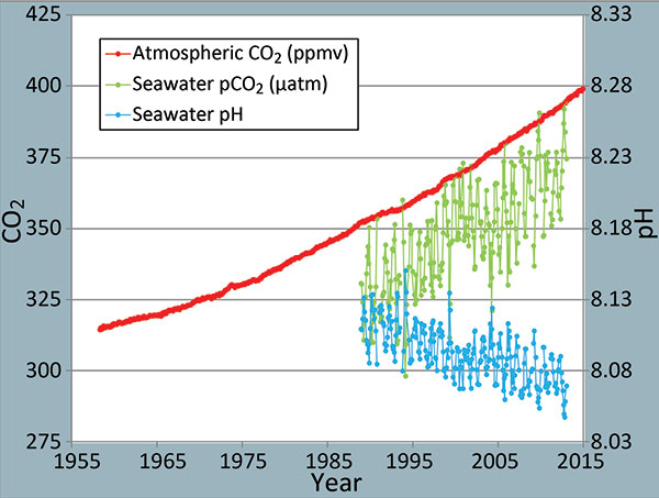 As atmospheric CO2 increases (red), dissolved CO2 also increases in seawater (green), and seawater pH drops (blue). | Graph: NOAA